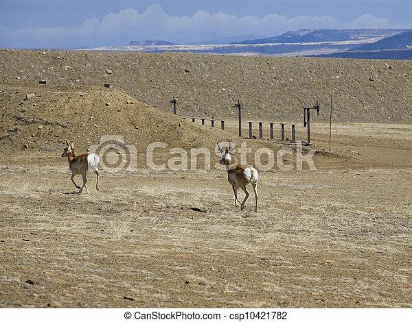 Escaping antelope - csp10421782