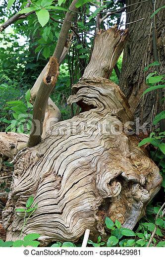 escena, árbol, caído, corteza, ondulado, bosque, línea - csp84429981