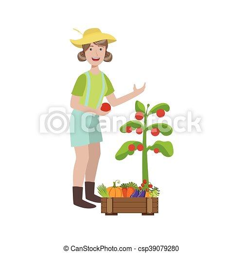 Mujer recogiendo tomates maduros en el jardín - csp39079280