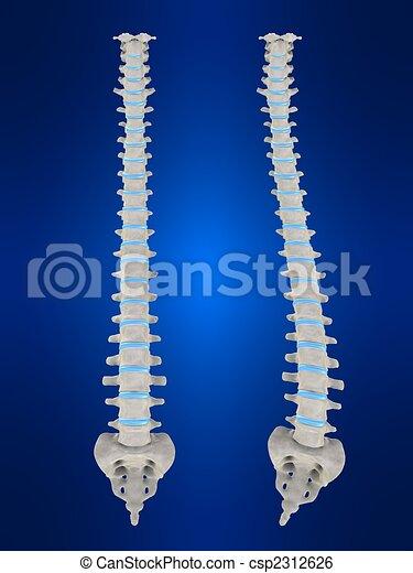Scoliosis - csp2312626