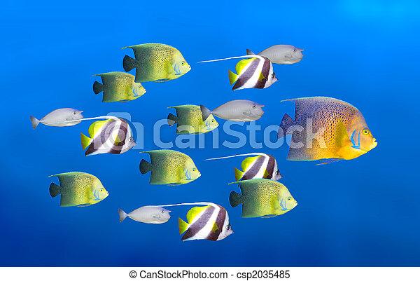 El concepto de liderazgo: peces grandes liderando la escuela de peces tropicales - csp2035485