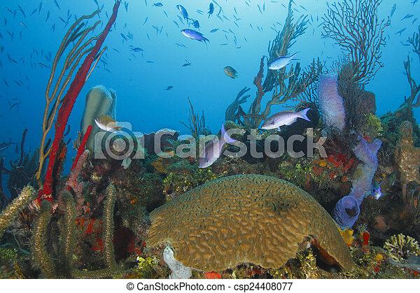 Escuela de peces sobre un arrecife de coral tropical - csp24408077