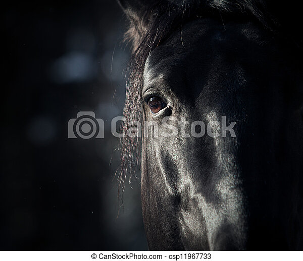 escuro, cavalo, olho - csp11967733