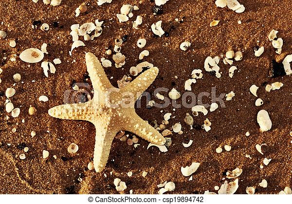 esotico, starfish, sgusciare, riscaldare, tramonto, mare, spiaggia - csp19894742