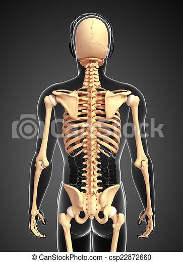 Espalda, esqueleto, humano, vista. Humano, vista, esqueleto ...