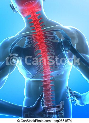 Espina de rayos X humanos - csp2651574