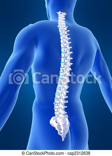 Espina dorsal, humano. Cuerpo, rendido, espina dorsal ...
