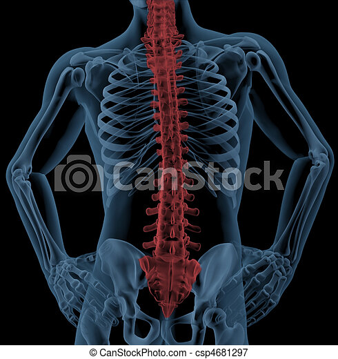 Espina dorsal, médico, esqueleto. Destacado, médico, vuelta ...