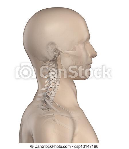 La columna kyfotica en la zona cervical 1 - csp13147198