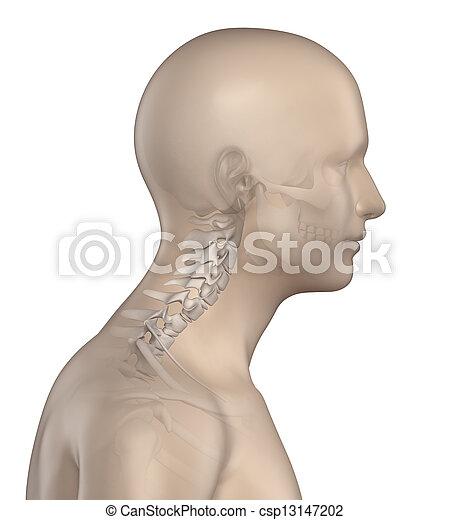 La columna kyfotica en la región cervical, fase 2 - csp13147202