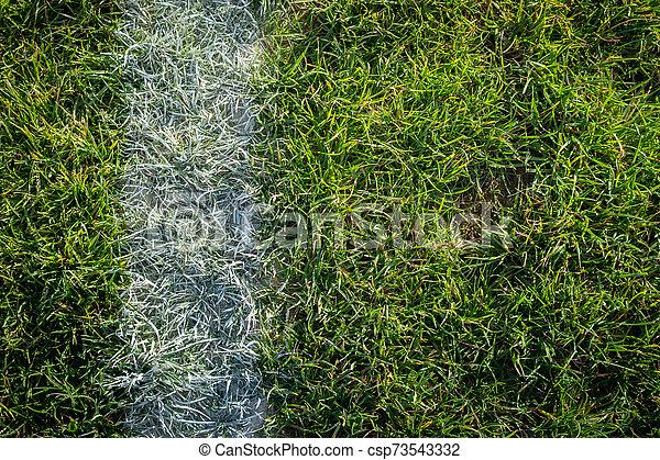 esportes, feild, sideline - csp73543332