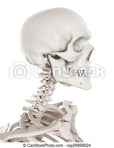 Esquelético, -, sistema, cuello. Cuello, esquelético,... clip art ...