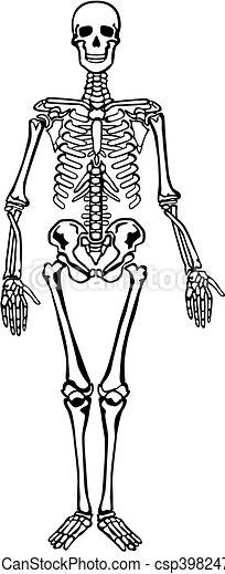 esqueleto - csp3982470