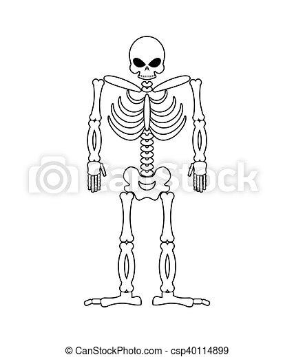 Esqueleto en fondo blanco. Cráneo y huesos. Muerto aislado - csp40114899