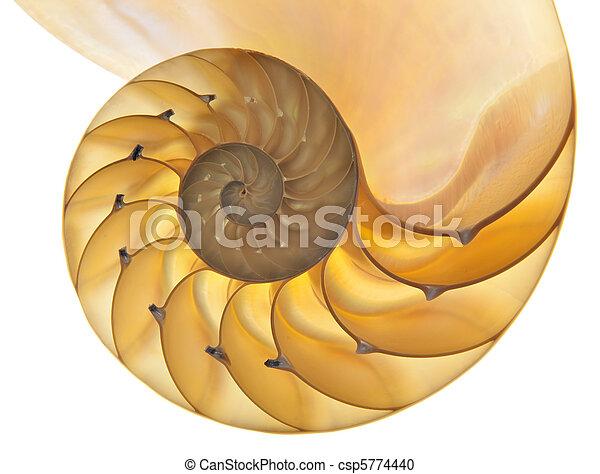 Concha de Nautilus - csp5774440