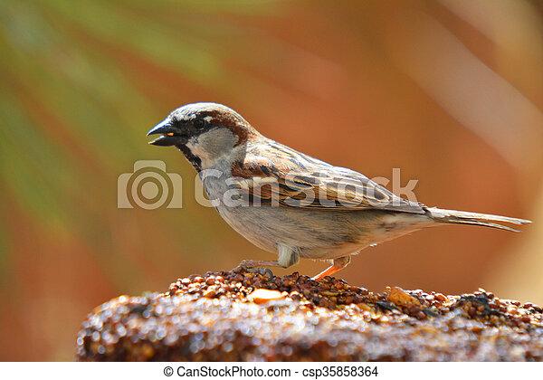 essende, bunte, zubringerlinie, samen, wilder vogel, block - csp35858364