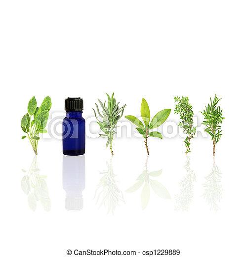 Essential Aromatic Herbs  - csp1229889