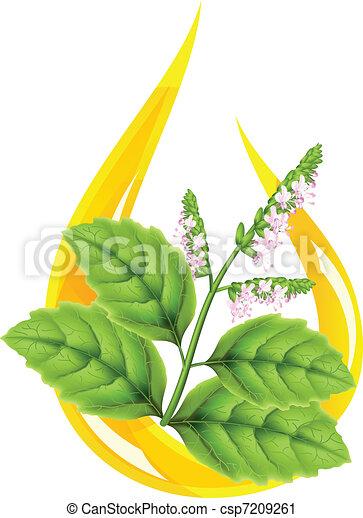 Essential oil of patchouli (Pogostemon cablini). Stylized drop.  - csp7209261