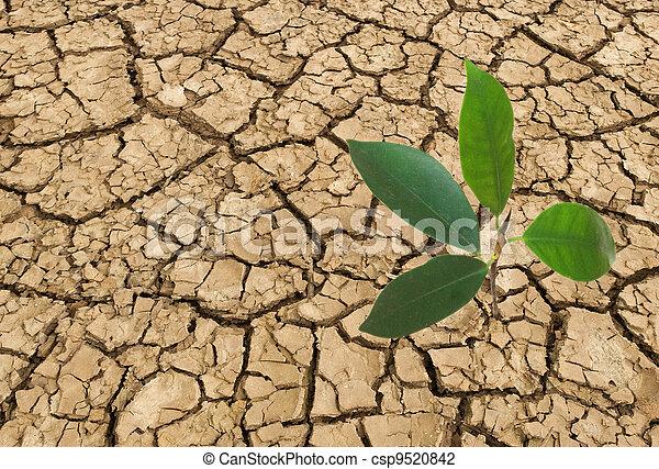 Las semillas crecen de tierra estéril - csp9520842