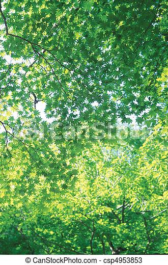 estações, natureza - csp4953853
