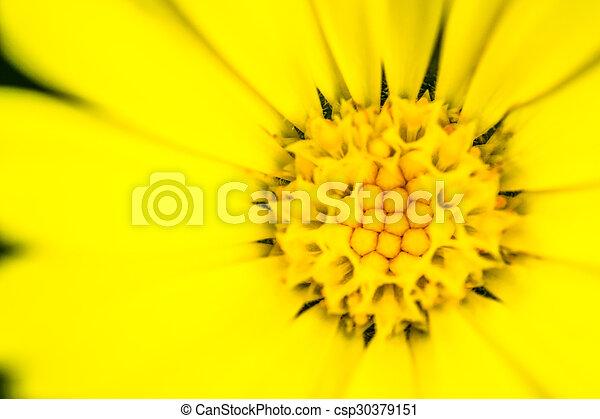 El primer plano de una flor amarilla Stamen - csp30379151