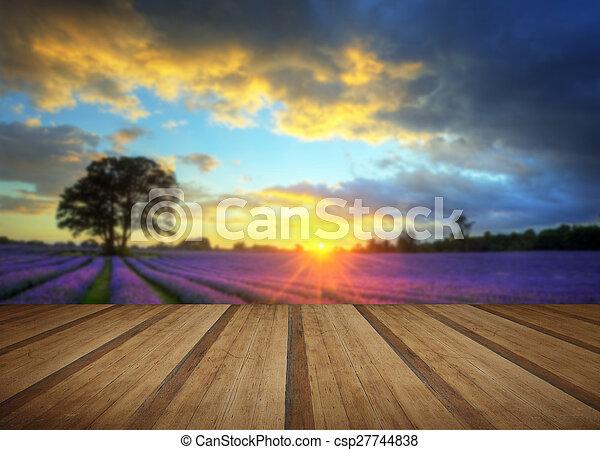 estate, atmosferico, pavimento, legno, vibrante, sopra, lavanda, tramortire, tramonto, campi, assi - csp27744838