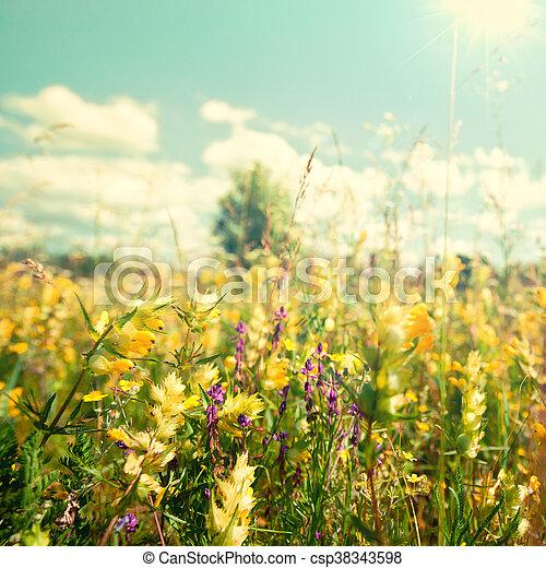 Estate Bellezza Sole Astratto Sfondi Luminoso Sotto Fiori