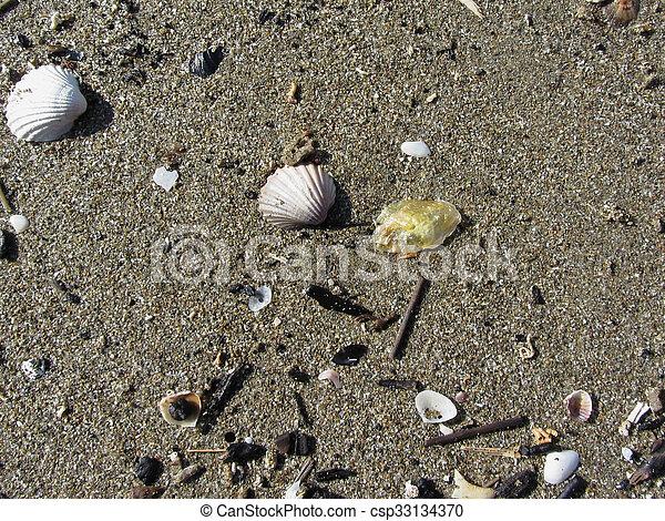 estate, sgusciare, sand., cima, fondo., mare, spiaggia, vista - csp33134370