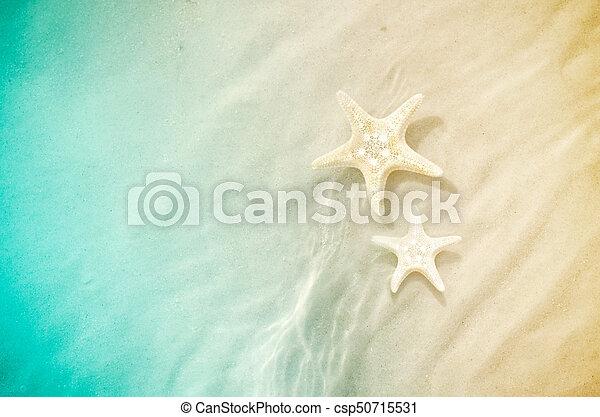 estate, spiaggia sabbia, starfish - csp50715531