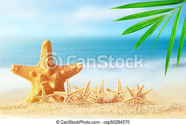 estate, spiaggia sabbia, starfish - csp50284370