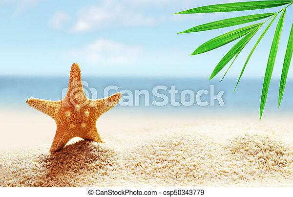 estate, spiaggia sabbia, starfish - csp50343779