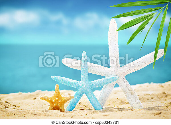 estate, spiaggia sabbia, starfish - csp50343781