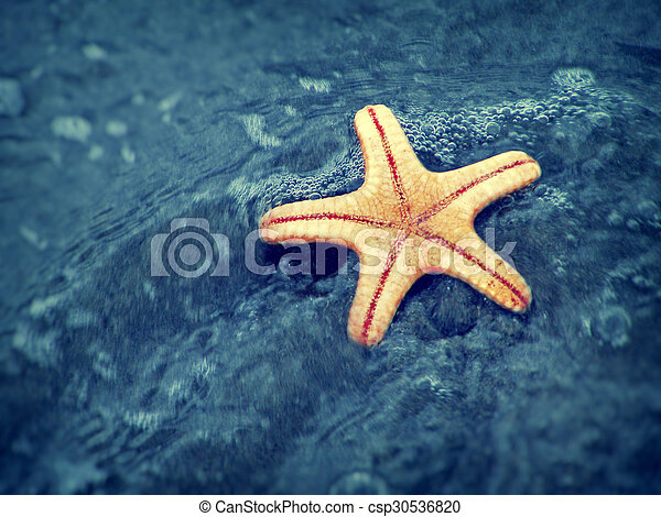 estate, spiaggia, starfish - csp30536820
