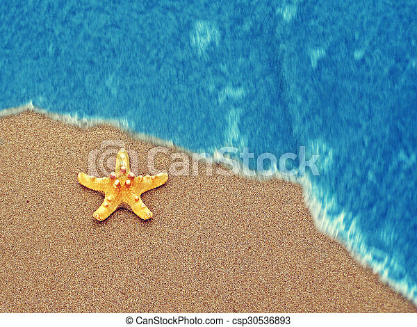 estate, spiaggia, starfish - csp30536893