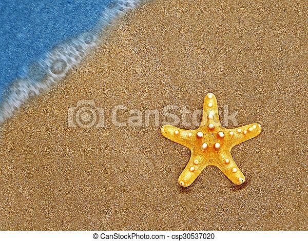 estate, spiaggia, starfish - csp30537020