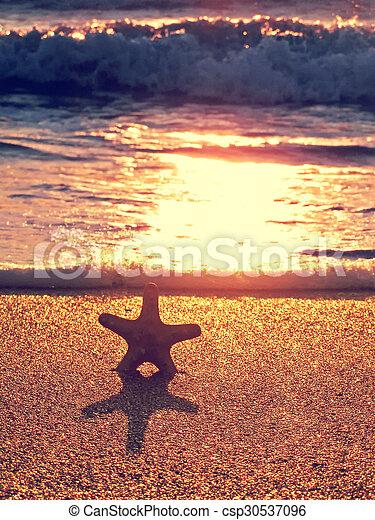 estate, spiaggia, starfish - csp30537096