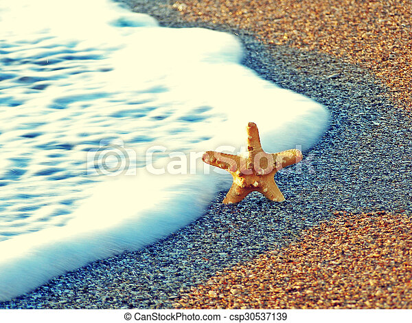 estate, spiaggia, starfish - csp30537139
