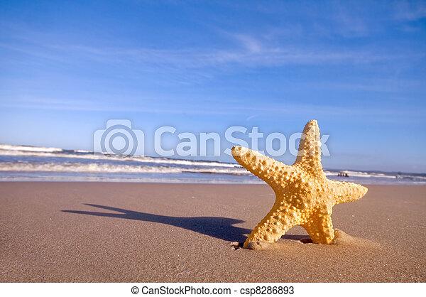 estate, spiaggia, starfish - csp8286893