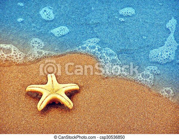 estate, spiaggia, starfish - csp30536850