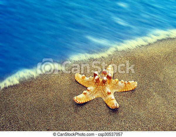 estate, spiaggia, starfish - csp30537057