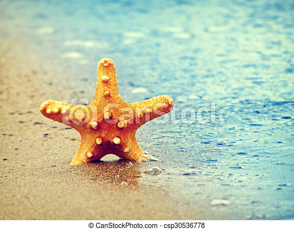 estate, spiaggia, starfish - csp30536778