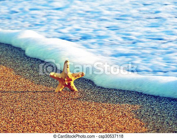 estate, spiaggia, starfish - csp30537118