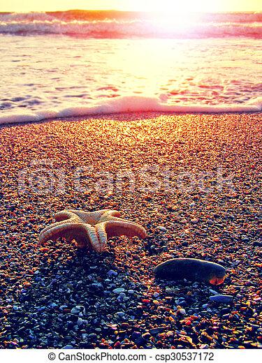 estate, spiaggia, starfish - csp30537172