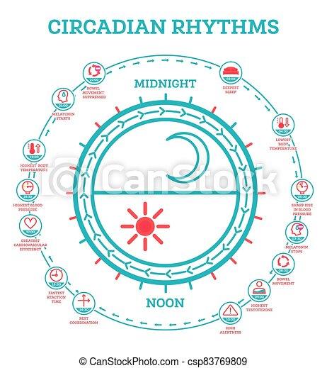 estela, exposición, infographic, rhythm., cycle., sueño, hormonas, luz del sol, esquema, production., regula, circadian, elements. - csp83769809