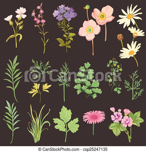 Un juego de flores y hierbas, estilo acuarela dibujado a mano, en vector - csp25247135