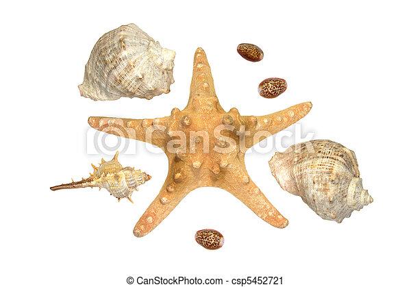 Estrella marina y algunas conchas aisladas - csp5452721