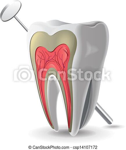 La estructura del diente - csp14107172