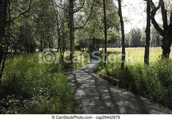 Estuary Path - csp29442979