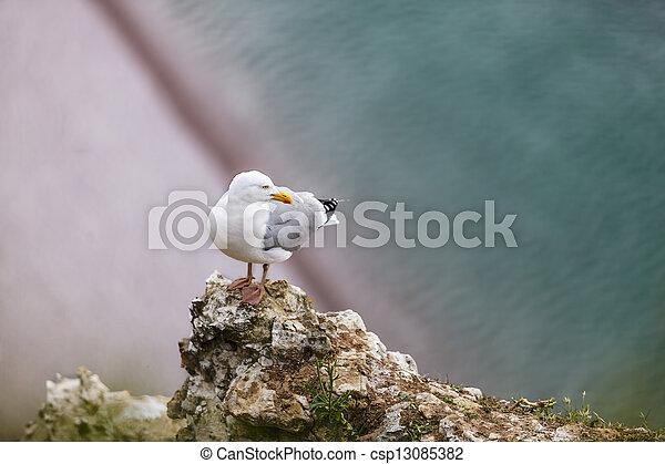 etretat, sill, klippor, fiskmås, europe - csp13085382