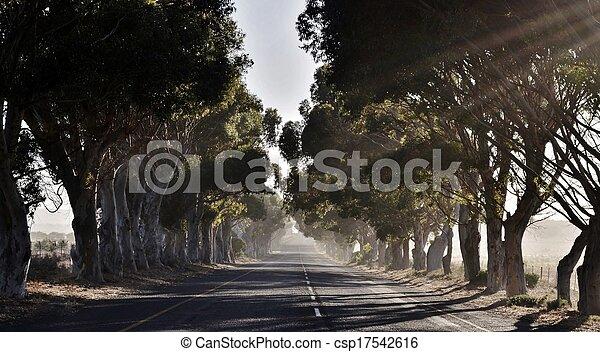 Avenida Eucalyptus - csp17542616